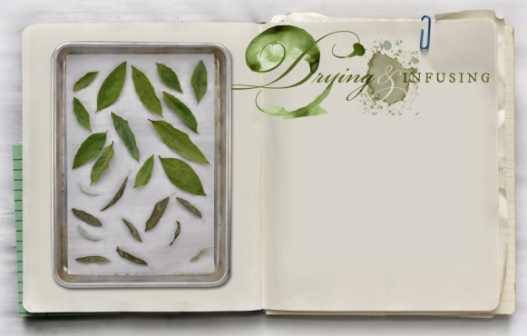 How to Dry and Infuse Herbs